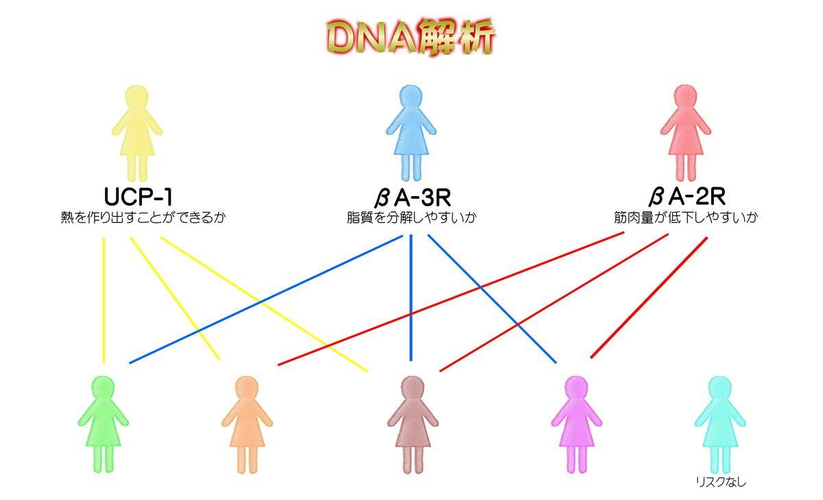 ダイエット福井エステDNA解析